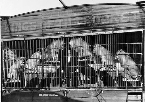 B+W photo Capt Herbert Vincent Clarke and the Pat Collins Lions early 1930s. tamer in middle with 6 lions on steps behind bars