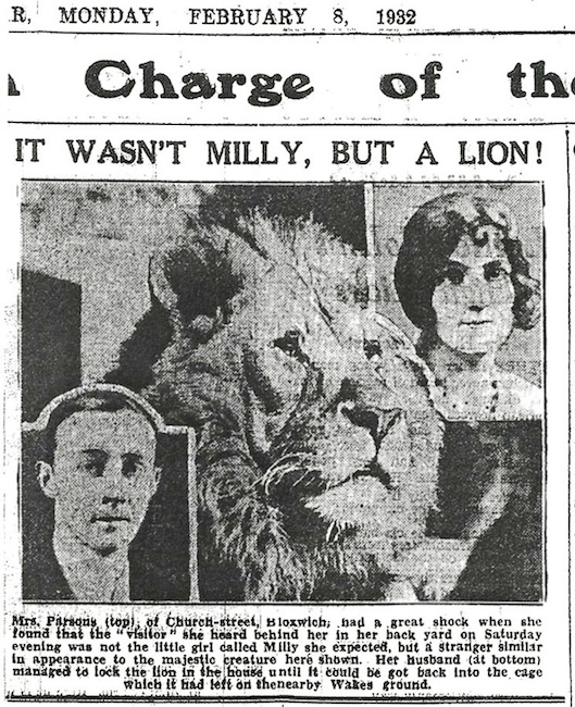 web-915x744-The Bloxwich Lion which escaped into Church St  Express  & Star 8 Feb 1932
